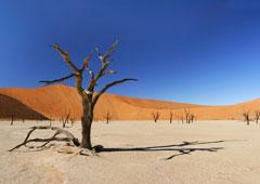dode boom in de woestijn