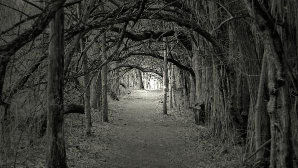 Citaten Uit Interviews : Licht en donker spiritualiteit